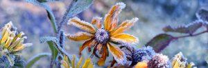 Blumen 686