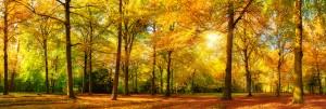 Herbst Wald Panorama im goldenen Sonnenschein, prächtige Herbstfarben